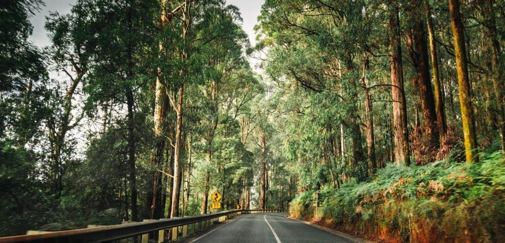 Australia Rainforest