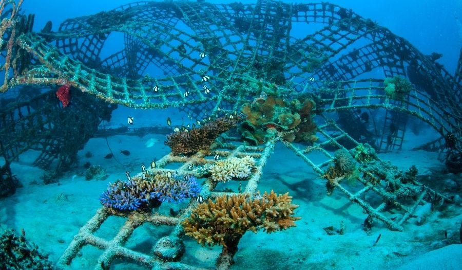 Best scuba diving in Bali: Biorock Reefs in Pemuteran Bali Scuba Diving