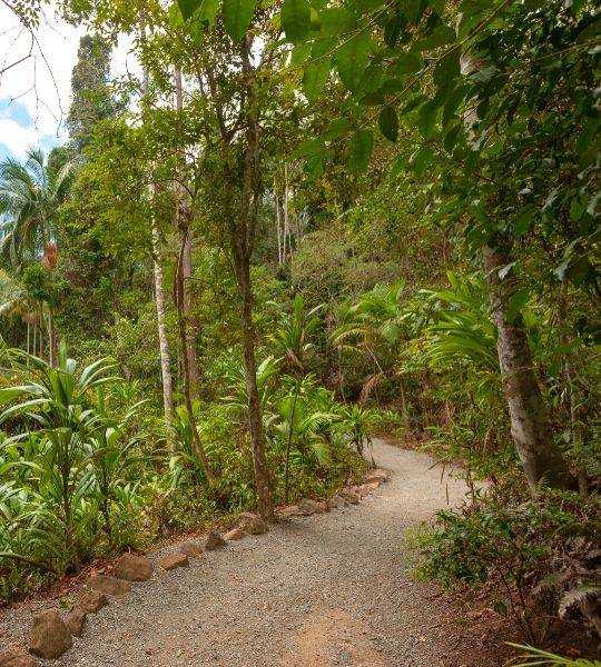 Brisbane Hikes Mount Tamborine