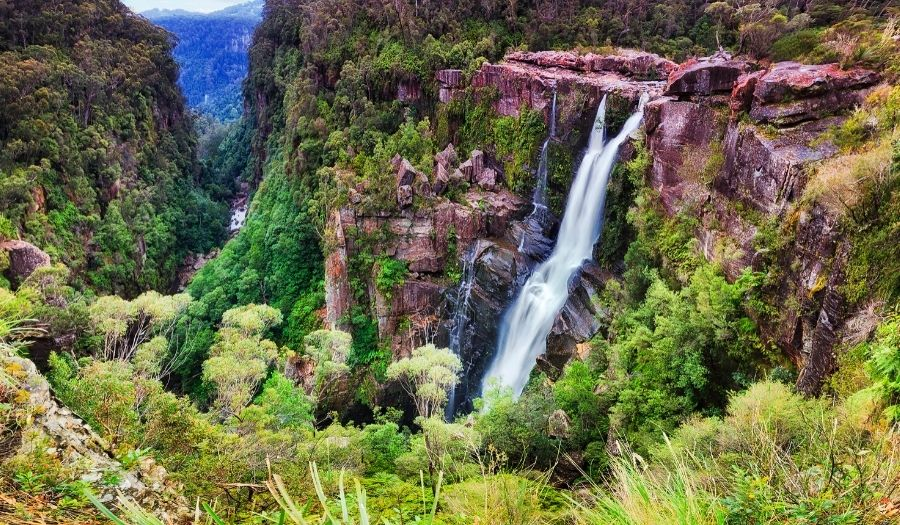 Budderoo National Park Australia Rain Forest