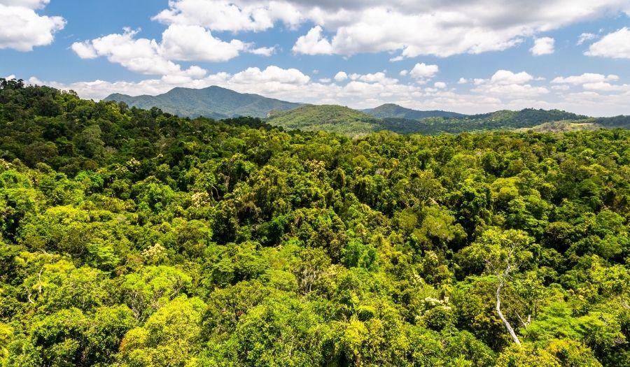 Kuranda Rainforest Australia