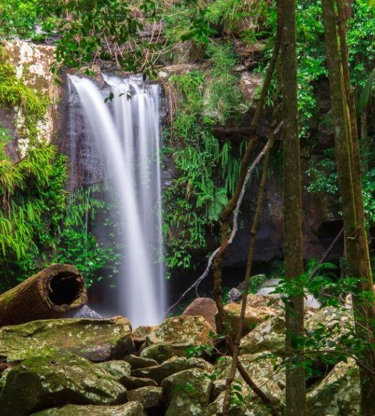 Mount Tamborine Brisbane Hikes