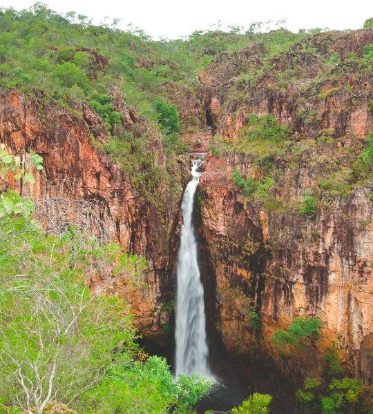 National Parks Rain Forest Australia