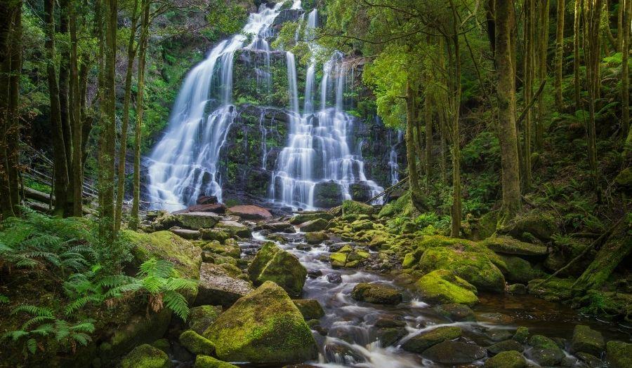 Nelson Falls Australia Rain Forest