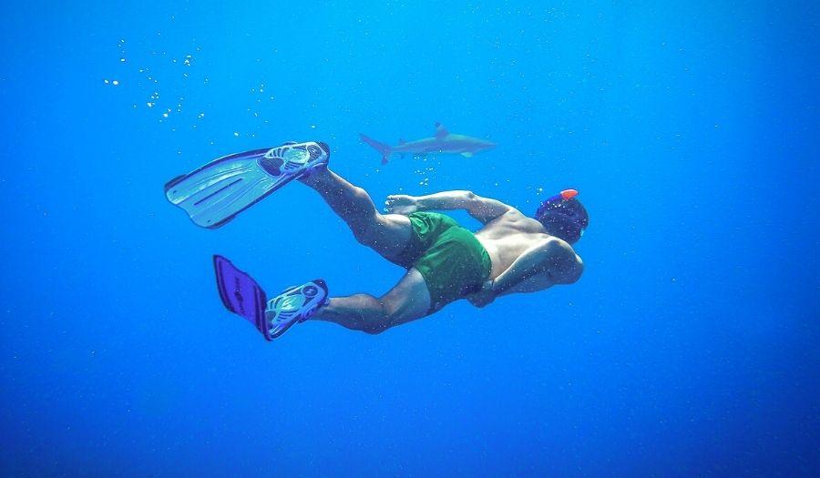 Shark Islanda Bali Snorkeling