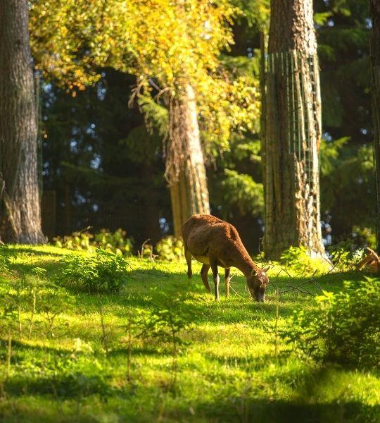 Wildlife in Amsterdam Forest