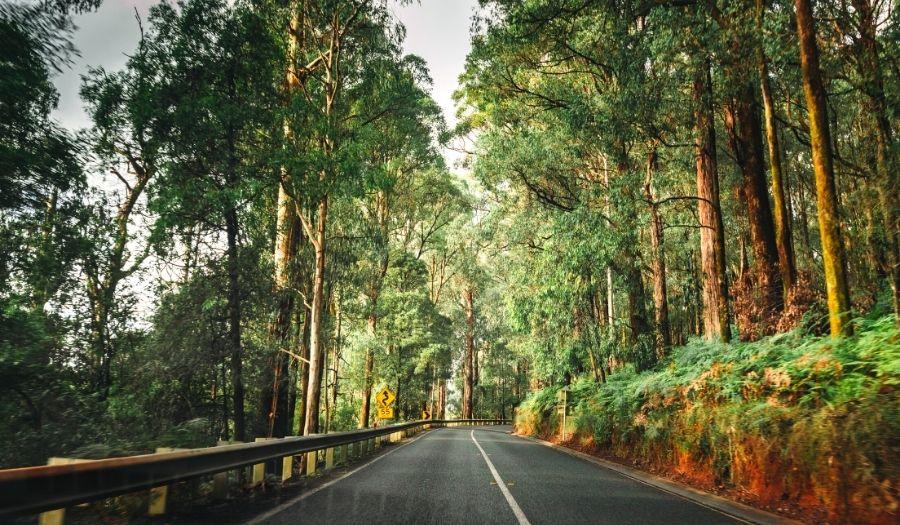 Yarra Ranges National Park Rain Forest Australia 2