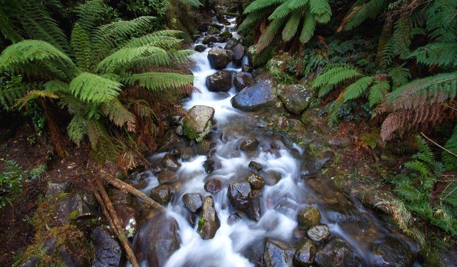 Yarra Ranges National Park Rain Forest Australia