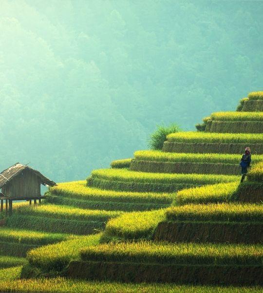 Bali Rice Terrace Munduk Loop