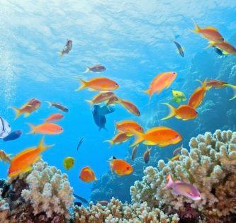 Great Barrier Reef Guide